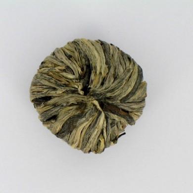 Fleur de thé blanc fermée