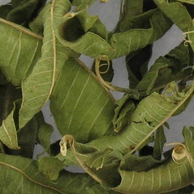 Purement Verveine odorante feuilles bio