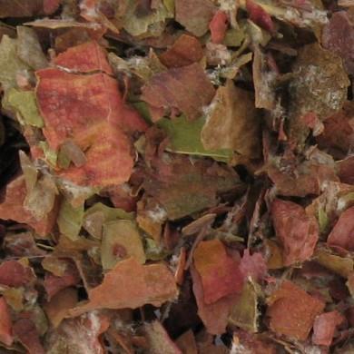 Purement Vigne rouge feuilles bio