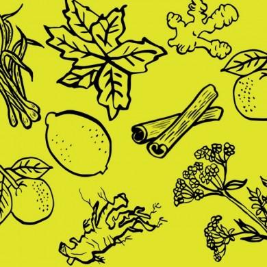 plantes CHAI  : menthe citron