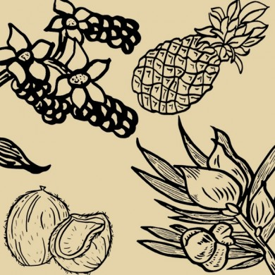 Infusion SOBACHA rooibos ananas coco