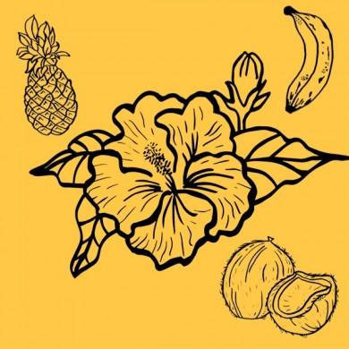 Infusion bio d'hibiscus ananas coco