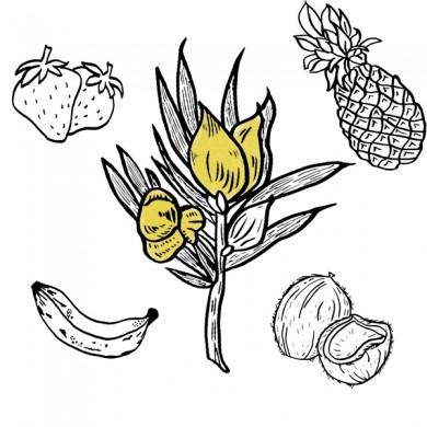 Infusion Rooibos fraise banane, noix de coco