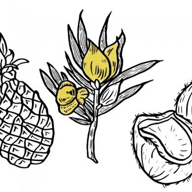 rooibos ananas, noix de coco, sucre de canne