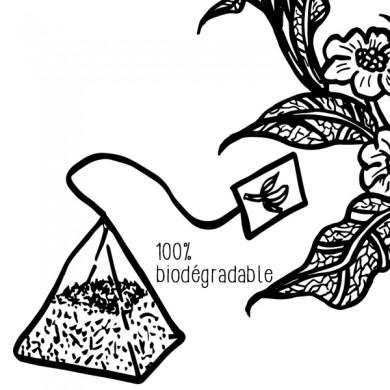 thé noir darjeeling ging 20 pyramides P3