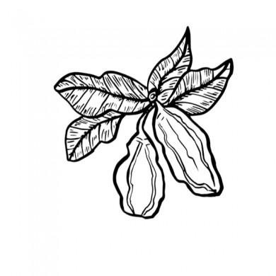 chocolat en poudre bio aromatisé caramel
